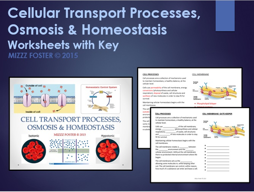 cellular transport worksheet key