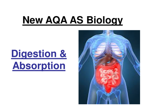 New AQA  AS Biology - Digestion & Absorption