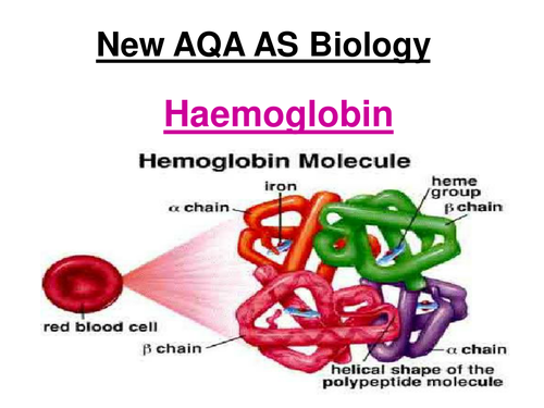 New AQA AS Biology - Haemoglobin