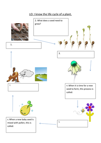 Life Cycle Of A Plant Powerpoint By Elisewilkinson