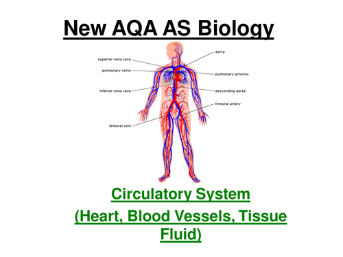 New AQA AS Biology - Circulatory System