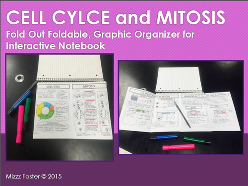 Cell Cycle and Mitosis Graphic Organizer Foldable for Interactive Notebook