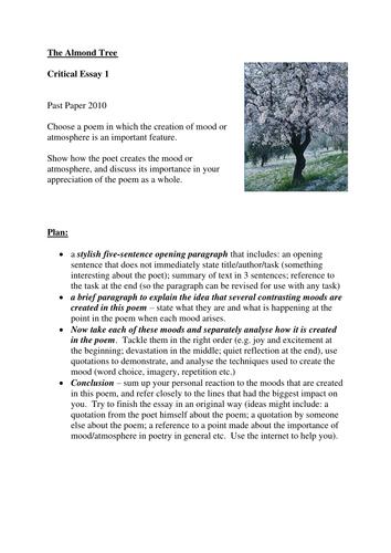 The Almond Tree essay plan