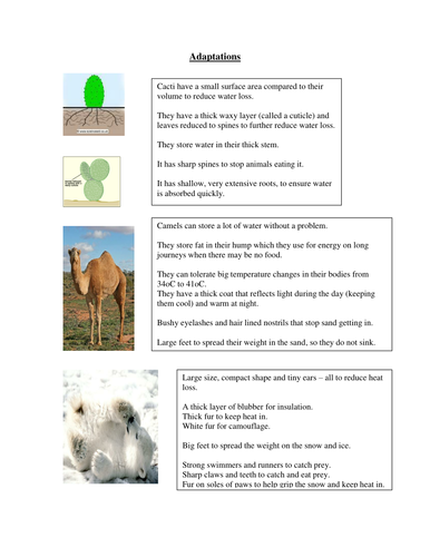 Gcse Biology Adaptation Worksheets By Jam2015 Teaching