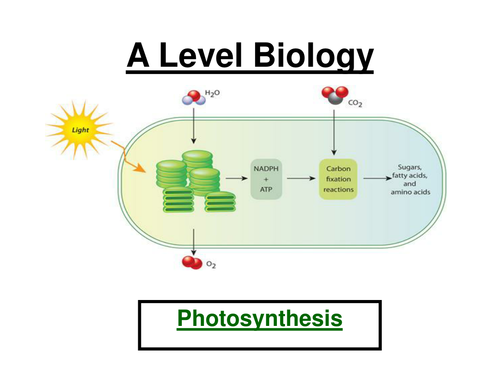AQA A  Level Biology - Photosynthesis ppt & Workbook