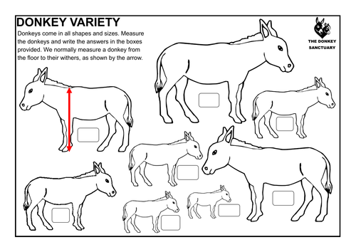 Measuring accurately: Donkey Variety