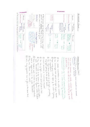 AQA A Level Biology - Nitrogen Cycle ppt, worksheet, practical & helpsheet