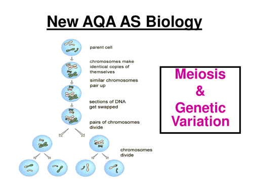 New AQA AS Biology - Meiosis & Genetic Variation