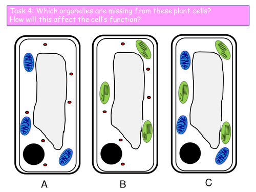 AQA B2.2 Bacteria and yeast lesson