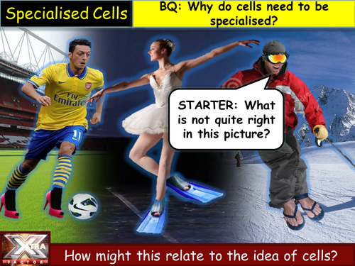 AQA B2.3 - Specialised cells speed dating lesson