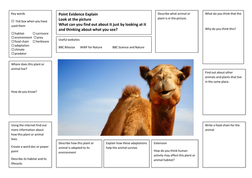 Differentiated Adaptation Research Writing Frames