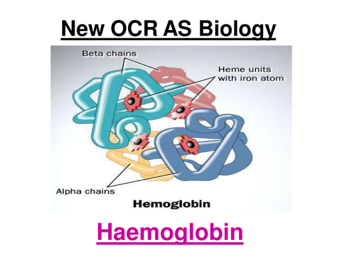 New OCR AS Biology - Haemoglobin & Oxygen Dissociation Curves