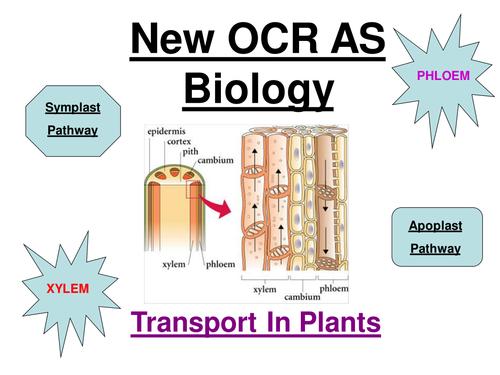 New OCR AS Biology - Transport In Plants