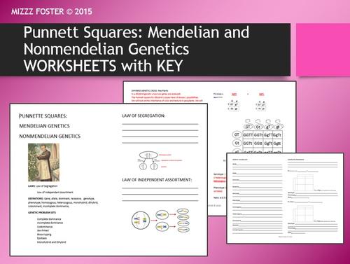 Genetics: Punnett Squares, Mendel, Non-Mendelian Student Worksheets with KEY