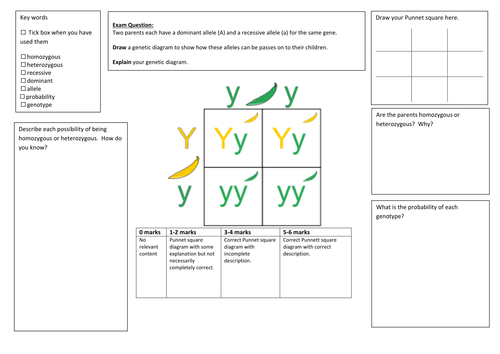 QWC Writing Frame with picture prompt  - Genetic Diagram (Punnet Square)