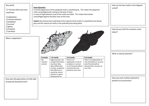 QWC Writing Frame with picture prompt - Peppered Moth