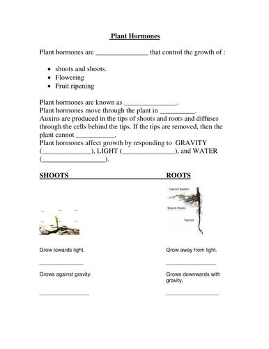 GCSE Biology (Foundation/SEN) : Plant Hormone w/sheet