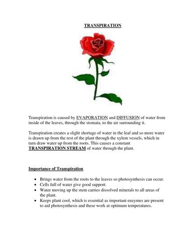 GCSE Biology : Transpiration w/sheet & practical sheets