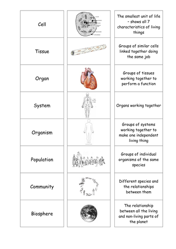 cells tissues organs cardsort by motllorrac teaching resources tes. Black Bedroom Furniture Sets. Home Design Ideas