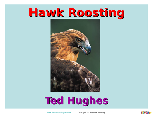 poetry commentary hawk roosting ted hughes Ted hughes poems lovesong he loved her and she loved him his kisses sucked hawk roosting i sit in the top of the wood, my eyes wind this house has been far out at sea all night, the woods.
