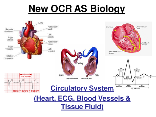 New OCR AS Biology - Circulatory System (27 slide ppt)