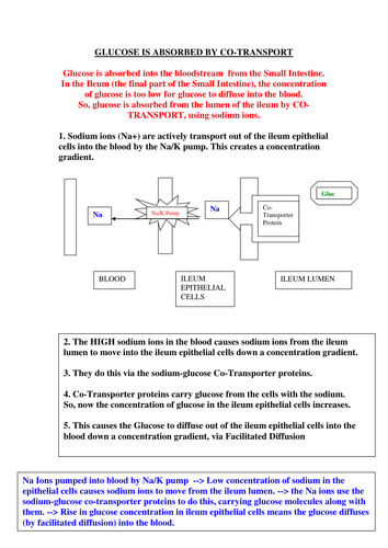 New AQA AS Biology - Glucose Co-Transport Helpsheet