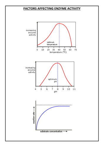 rate of reaction coursework ocr Rate of reaction introduction i will be investigating the rate of reaction, which is the amount of substance taken for the reaction often the rate curve is a negative.