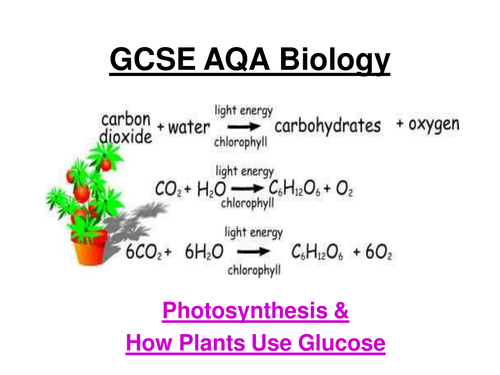 gcse aqa biology photosynthesis rates of photosynthesis graphs uses of glucose ppt 4 w. Black Bedroom Furniture Sets. Home Design Ideas