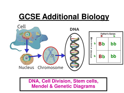 GCSE AQA Additional Biology: DNA, Cell Division, Mendel, Genetic diagrams, Screening ppt (24 slides)