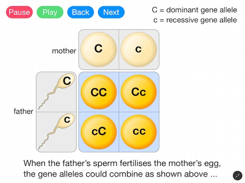 Gene Alleles and Heredity (Video)