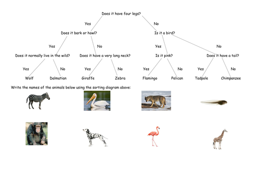 Using Sorting Branch Diagrams (full lesson)