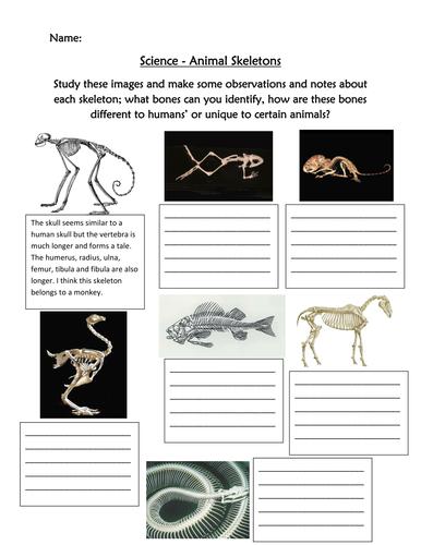 Identify Animal skeletons