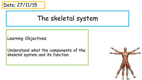 Skeleton Presentation