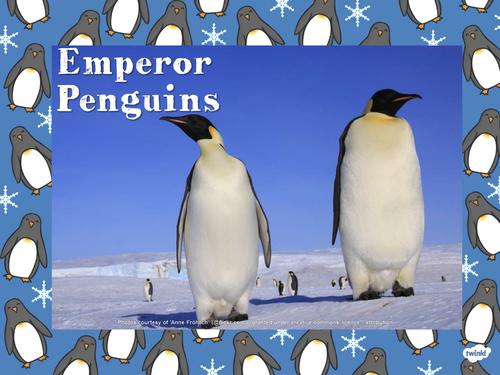 Emperor Penguin Info Powerpoint