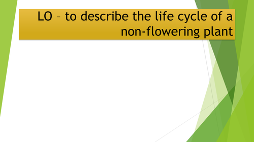 Non Flowering Plant Cycle By Amandametcalfe Teaching Resources Tes