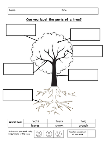 label the parts of a tree by ruthbentham teaching resources. Black Bedroom Furniture Sets. Home Design Ideas