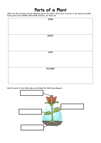 Parts Of A Plant By Marcocalleja Teaching Resources