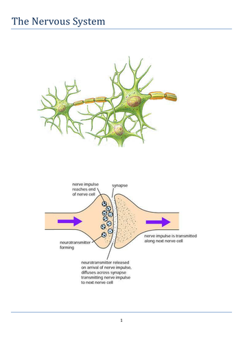 The Nervous System: Activity booklet for A Level Biology and related courses