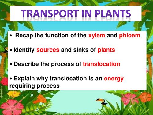 Science transportation in plants -xylem, phloem, transpiration.