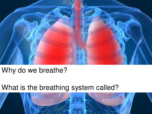 The respiratory system, PowerPoint with activities.