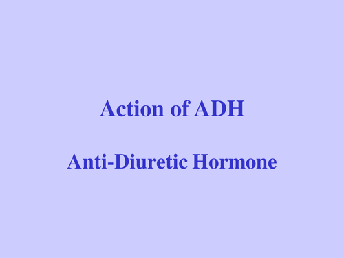 Osmoregulation for A Level - a detailed presentation on the role of ADH