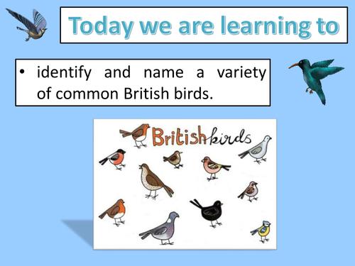 Name the British birds