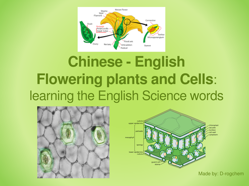 Biology: Scientific English for Chinese Students - flowering plants, leaves and plant cells