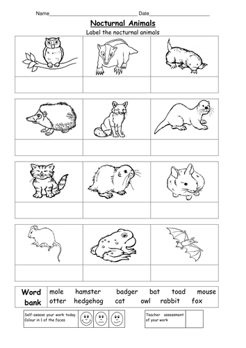 Animal Colouring Ks1 : Name the Nocturnal Animals by ruthbentham Teaching Resources Tes