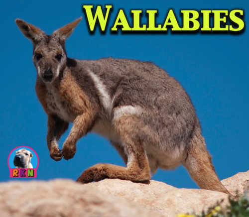 Wallabies - Powerpoint & Activities