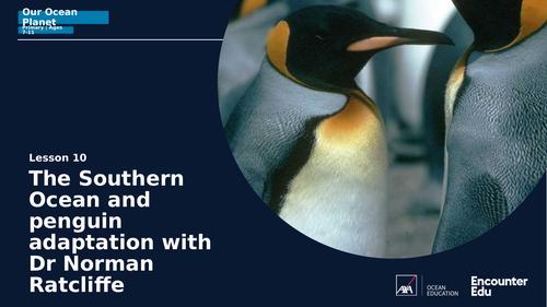 Adaptation and penguins KS2 Science
