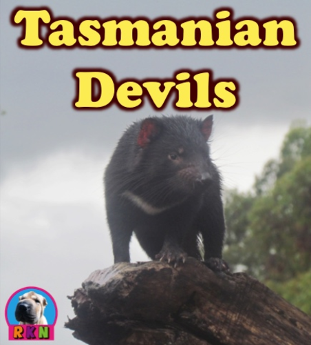 Tasmanian Devils - Powerpoint & Activities