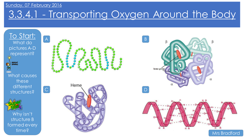 Haemoglobin and Transporting Oxygen