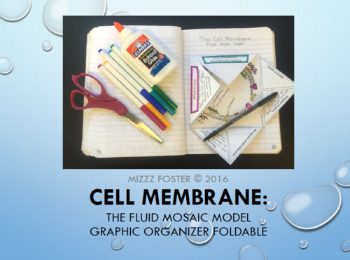 Cell Membrane Graphic Organizer Foldable Activity