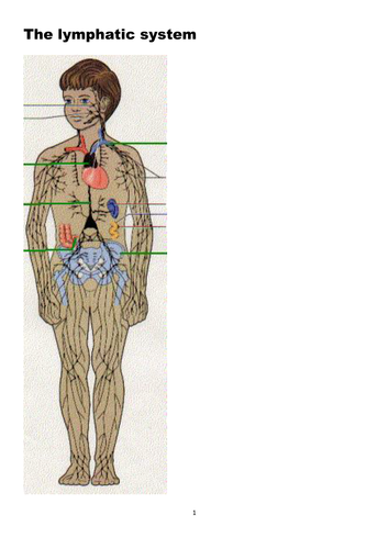 The Lymphatic system; suitable for GCSE, A Level, BTEC and similar courses.